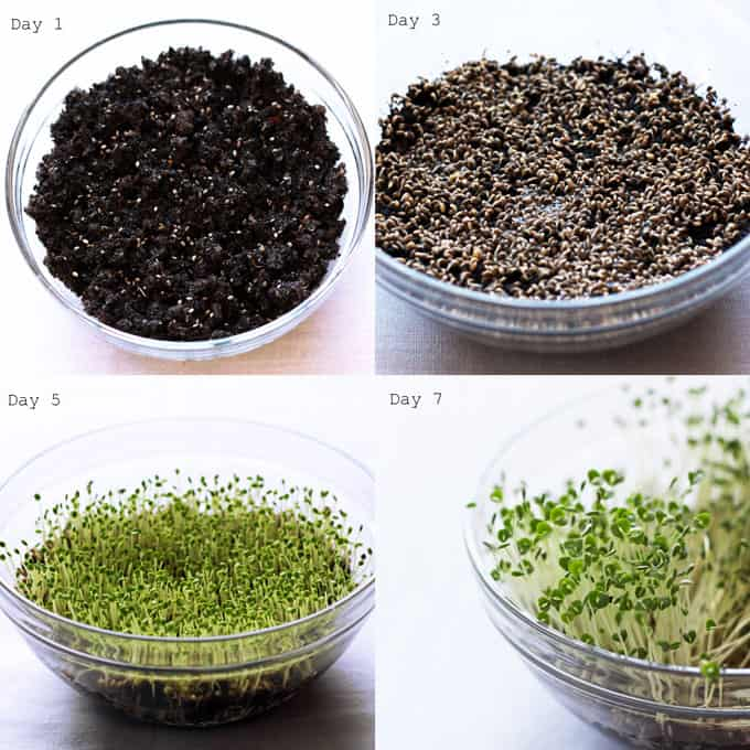 Chia-Sprout