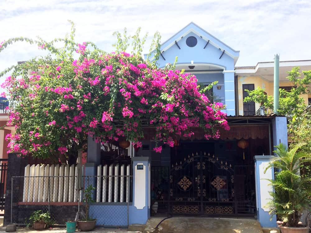 Bougainvillea Covered Entrance