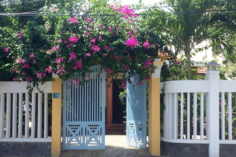 Bougainvillea-Covering-Gate