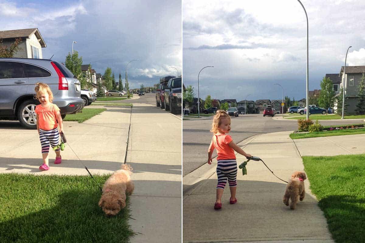 Toddler Doggie Walking