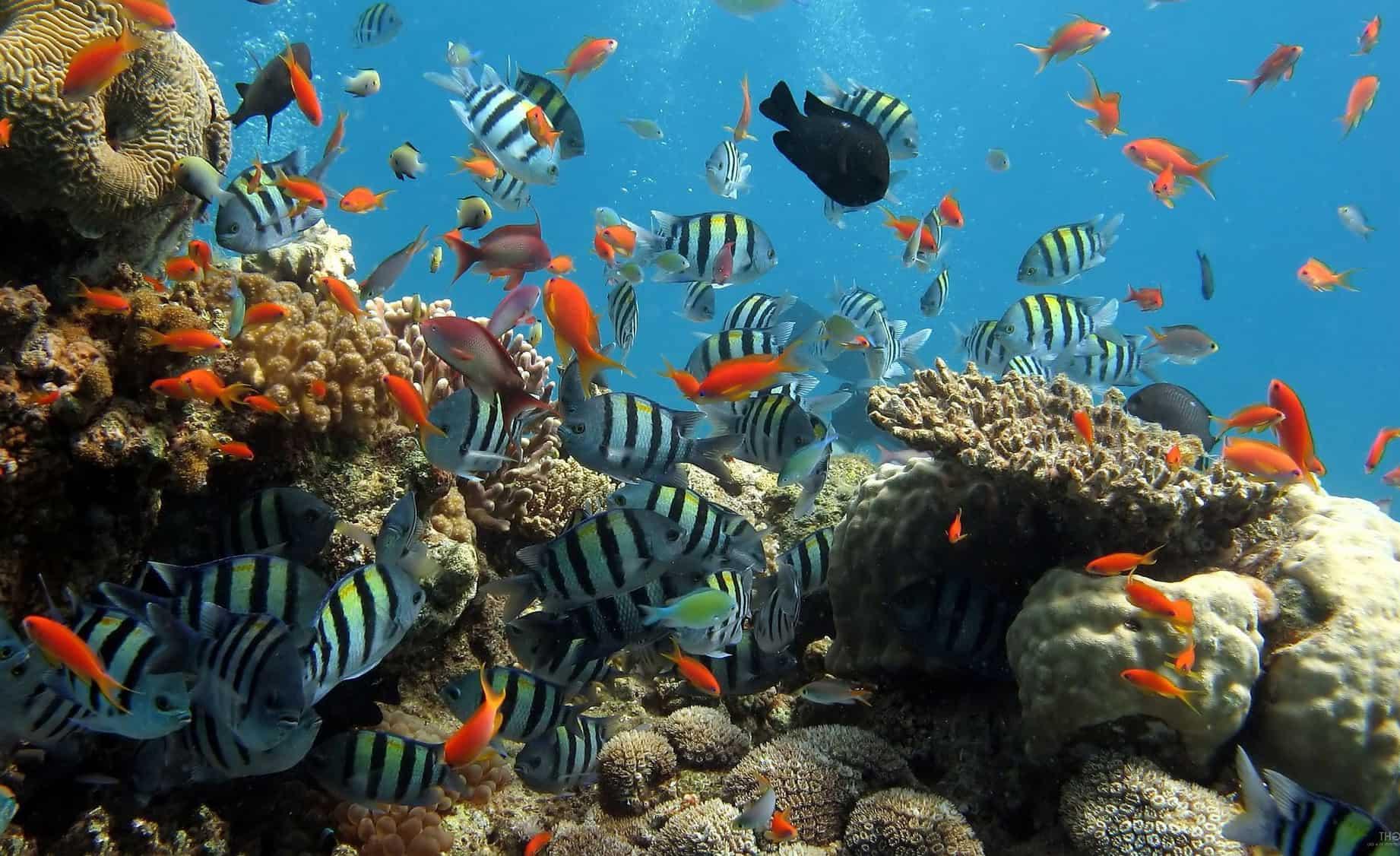 BeautyCounter Sunblock vs Coral Reefs