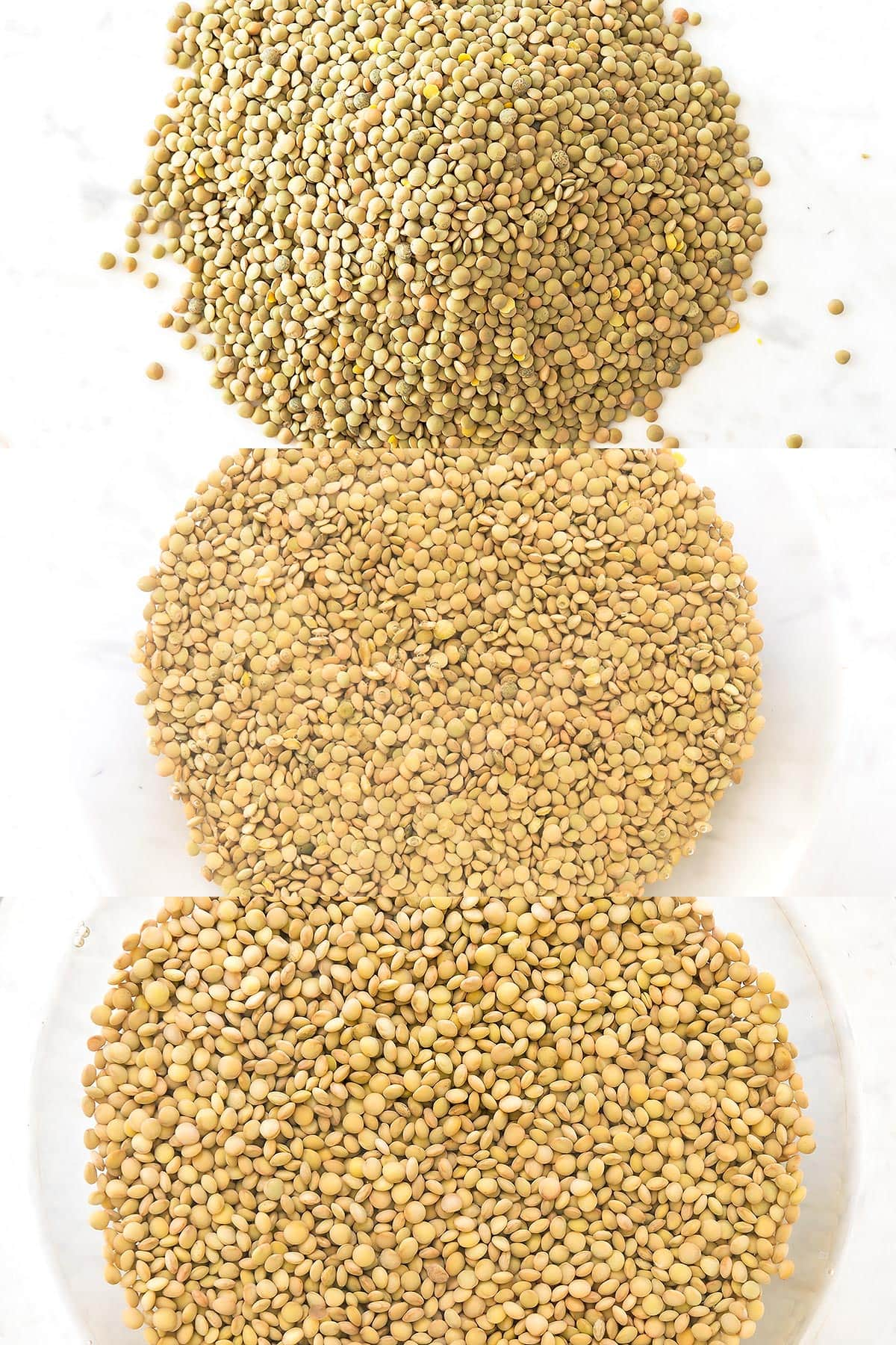 Dry and soaked lentils